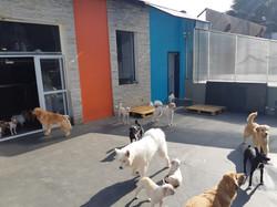 hotel para cachorro em moema