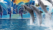 VC_SeaWorldSanDiego_LiveShows_Supplied_D