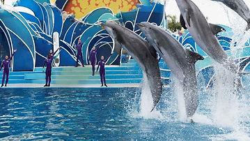 VC_SeaWorldSanDiego_LiveShows_Supplied_D