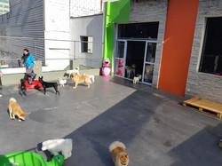 hotel canino