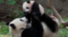 PandaCanyonSanDiegoZoo_1280x642.jpg