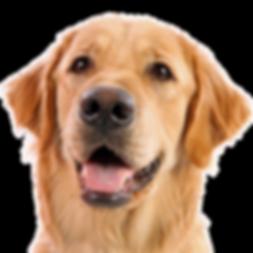 dog_PNG50317.png