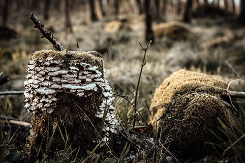 Skovens liv
