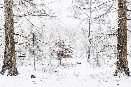 Sneen