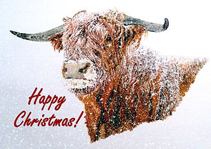Snowy Highland Cow in Falling Snow Chris