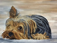 Yorkshire Terrier Appeal Greeting Card (