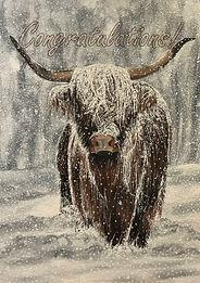 Very Snowy Highland Cow - Congratulation