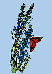 Butterfly and blue flowers Blank Greetin