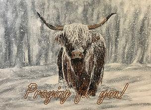 Very Snowy Highland Cow - Praying for Yo