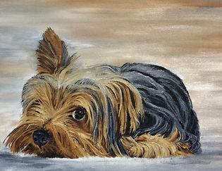 Yorkshire Terrier Appeal.jpg
