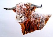 Snowy Highland Cow.jpg