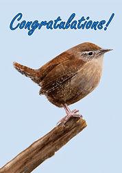 Wren Congratulations Card.jpg