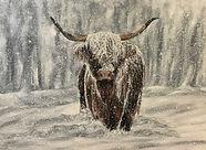 Very Snowy Highland Cow.jpg