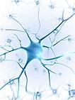 One Brain - metoda terapii i rozwoju oparta o neurobiologię