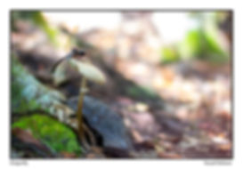 McKane - Dragonfly.jpg