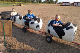 All aboard The Cow Train Express!