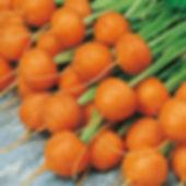 Carrot paris market.jpg