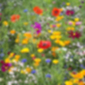 Wildflower mix.jpg