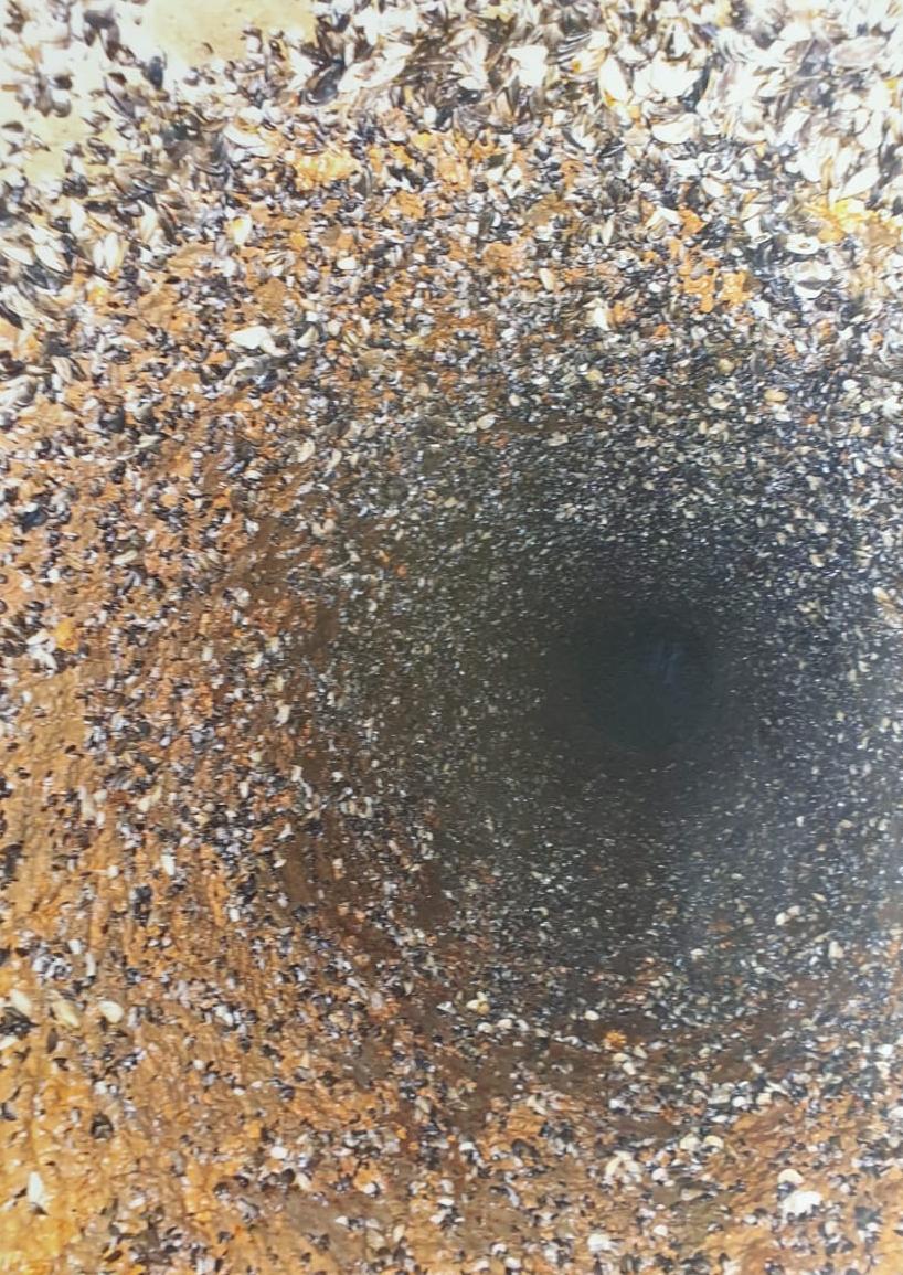 Quagga Muscheln in Rohrleitung DN 400