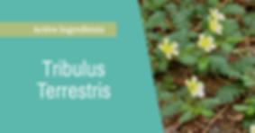 tribulus terrestris pronto.png