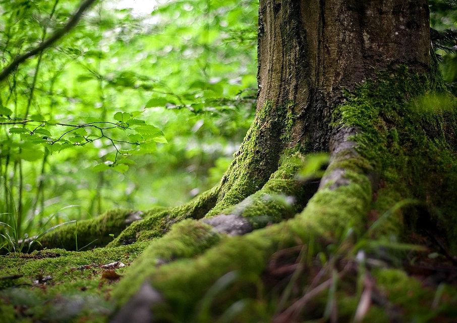 forest-2599720_1280_edited.jpg