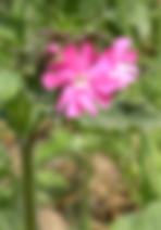 Infusions solaires florales avec les fleurs de chez nous. Atelier