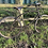 Thumbnail: BSA Folding Para Bike