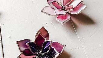 Pink succulents