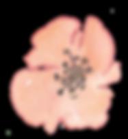 fleur04.png