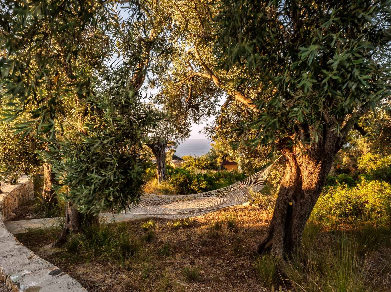Gorgeous Olive Groves