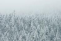 Treetop neige