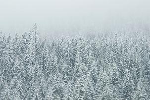 copas de los árboles de la nieve