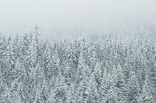 Treetop Snow