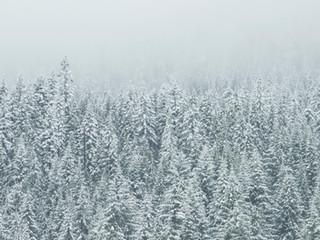 Snow again...