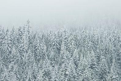 Treetop Schnee