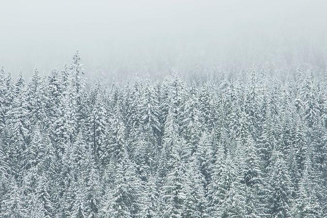 Cima di albero di neve