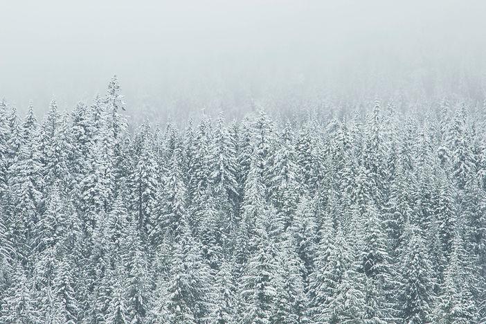 Treetop Sneeuw