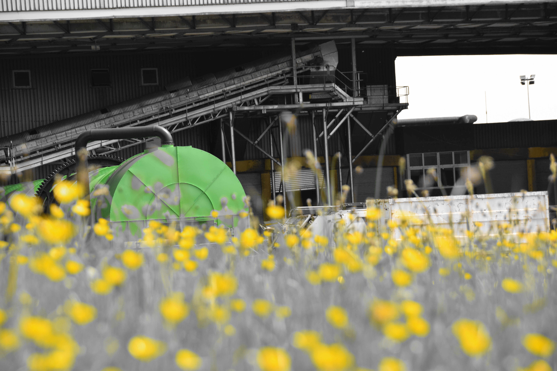 BRS et fleurs jaunes