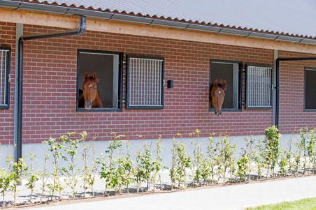 MFS Horses