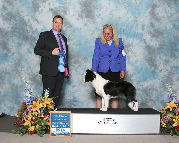Border collie puppy national specialty winner