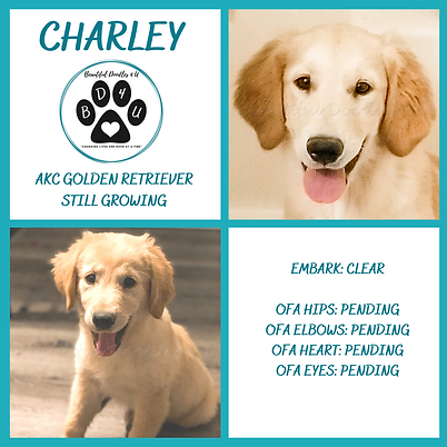 CHARLEY.png