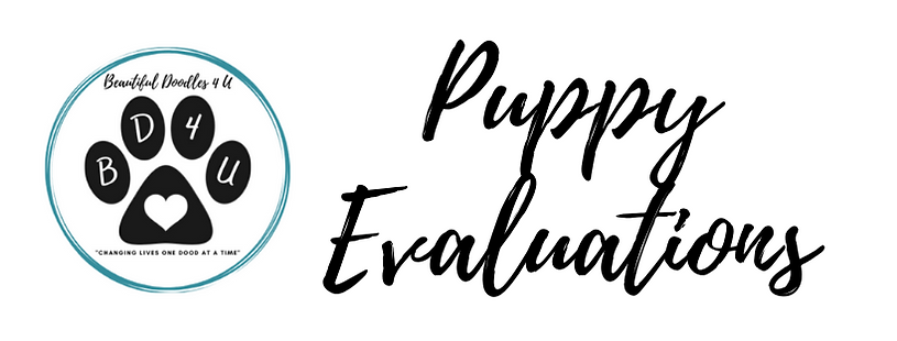 puppy evaluations cover.png