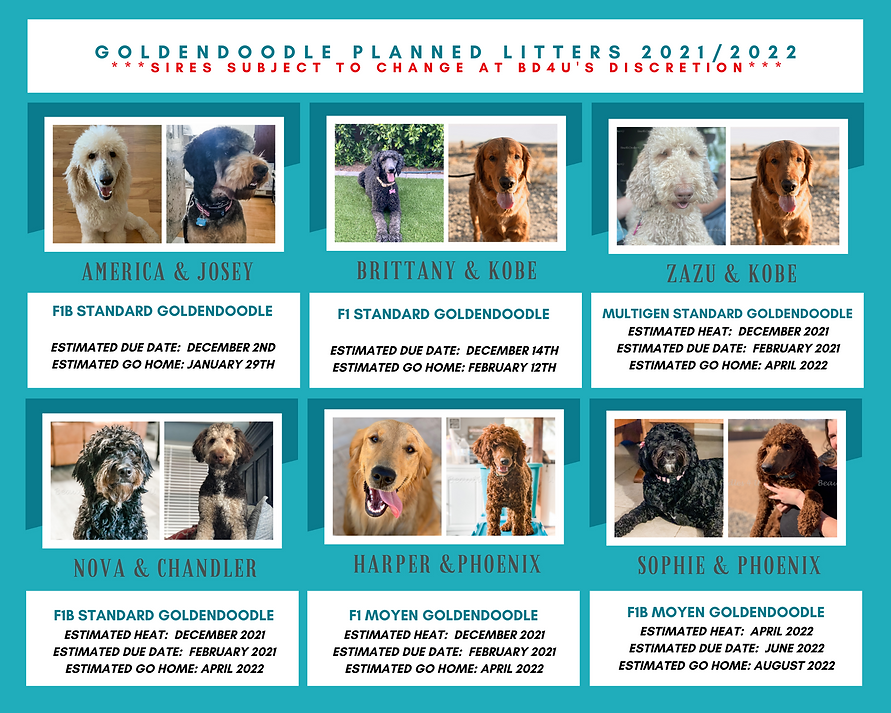 GOLDENDOODLE PLANNED LITTERS 20212022 (1).png