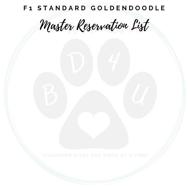 F1 Standard Goldendoodle Master Reservat