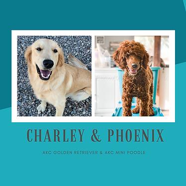 CHARLEY & PHOENIX.png