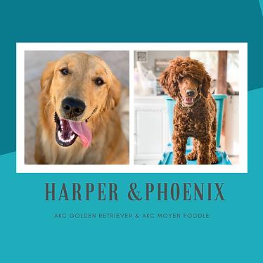 HARPER & PHOENIX.png