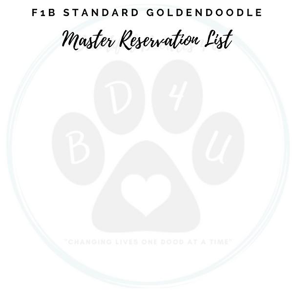 F1B Standard Goldendoodle Master Reserva