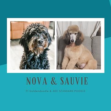 NOVA & SAUVIE.png