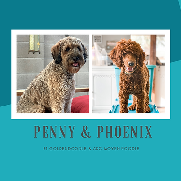 PENNY & PHOENIX .png