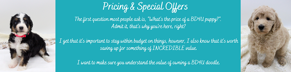 Pricing & Special Offers (1).png